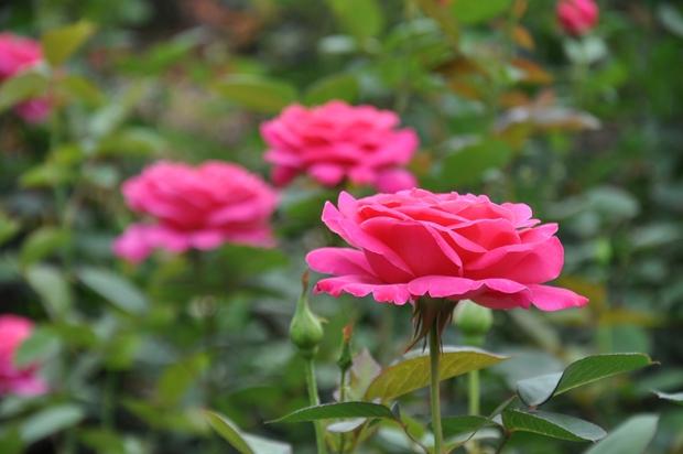 핑크 피스
