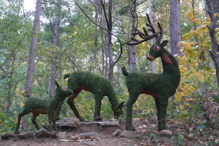 경기도 가평 추천여행 - 유명산자연휴양림, 낙엽 흩날리는 숲길에서 사슴 가족을 만납니다.