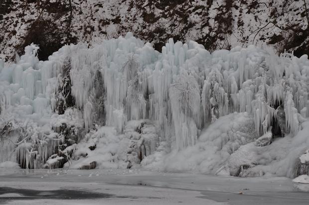 얼음나무숲