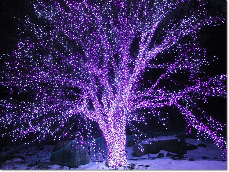 아침고요수목원 오색별빛정원전