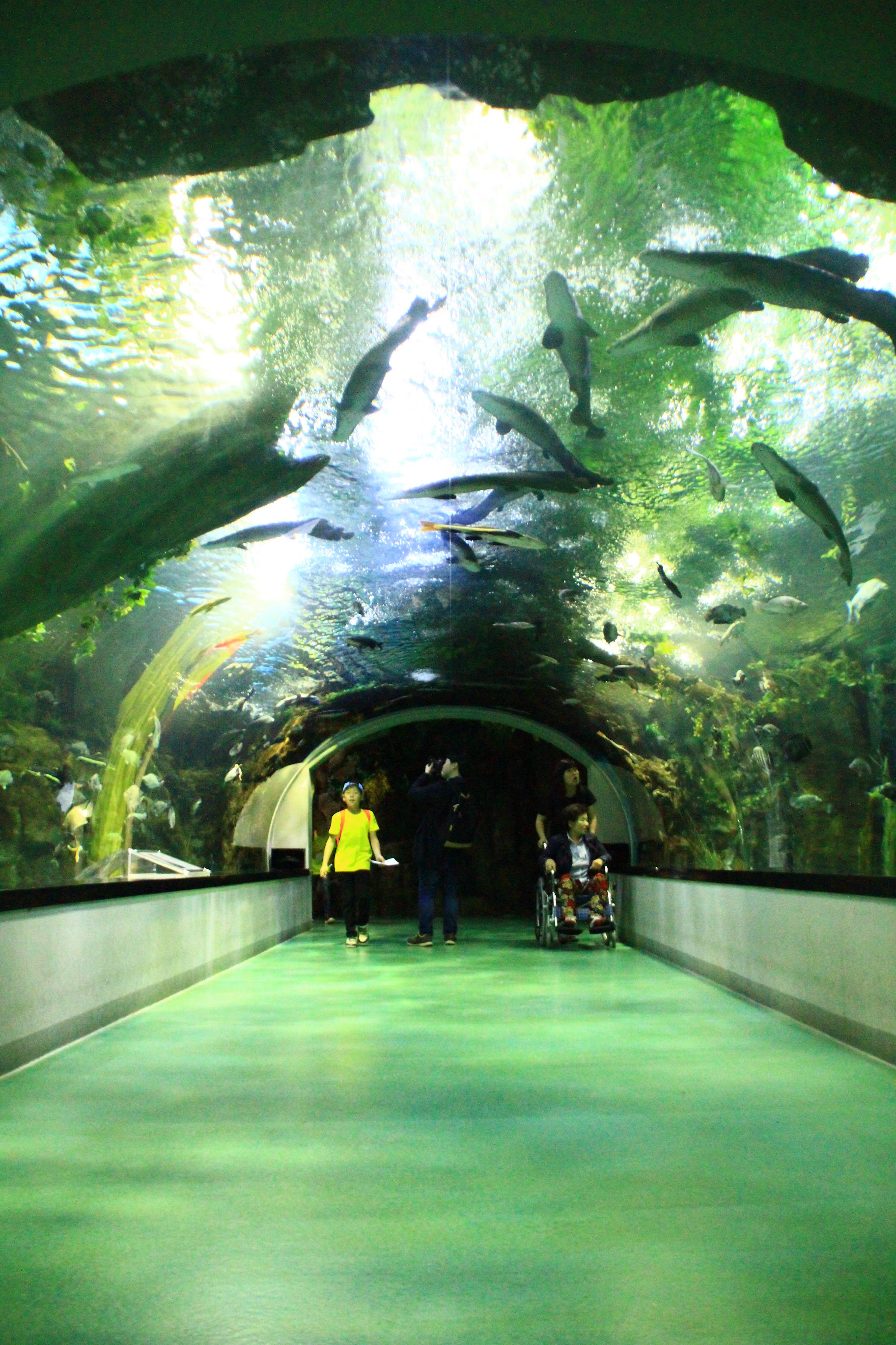 황악산.대부도,호수공원 1538