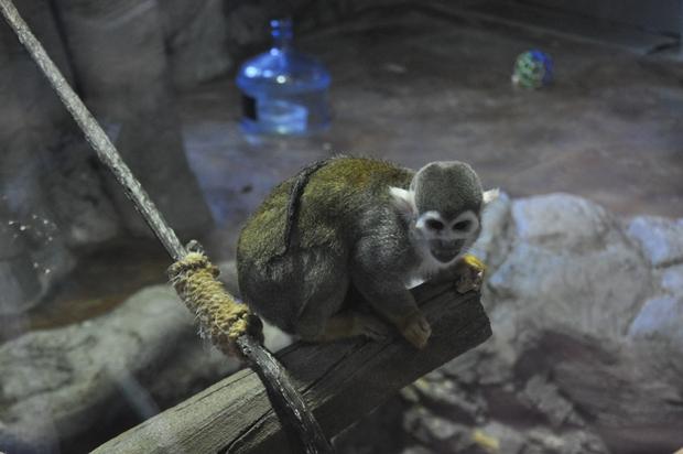 다람쥐 원숭이