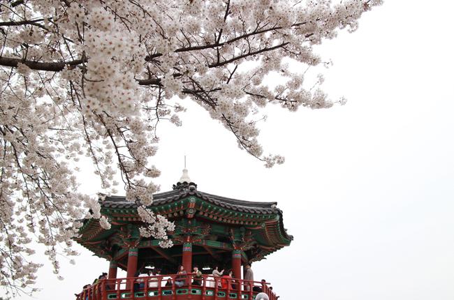 벚나무와 정자(亭子)
