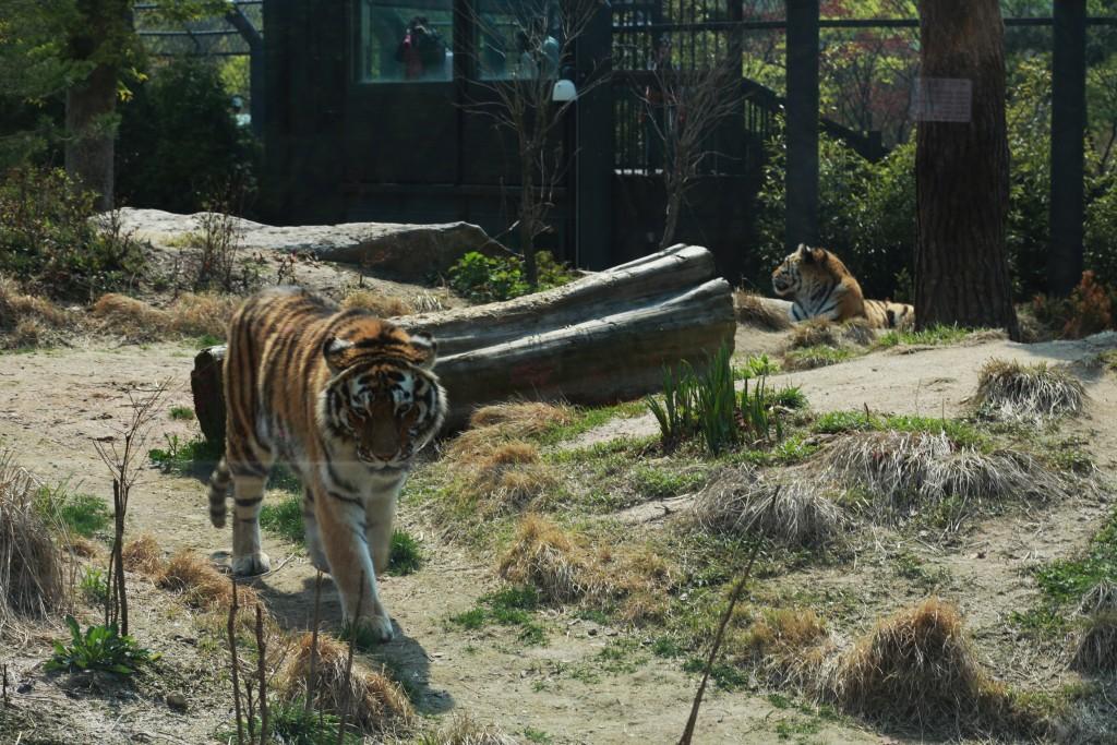 서울동물 210