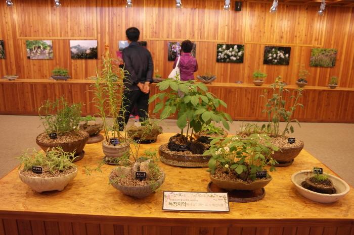 특정지역에서 사는 식물