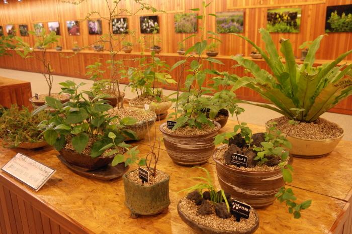 섬에서 사는 식물