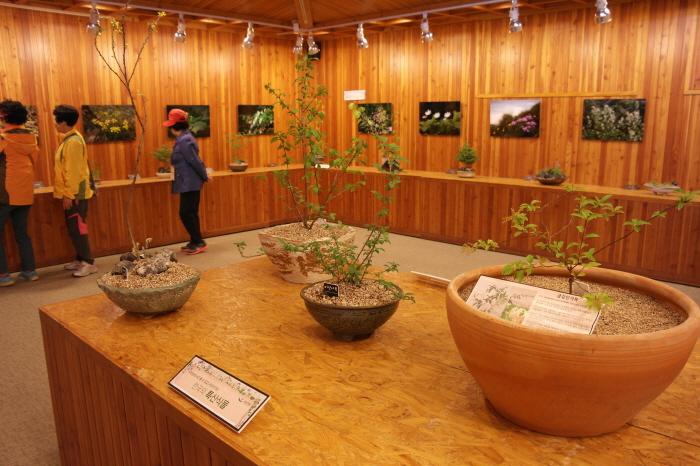 한국의 특산식물