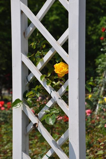 분수대 정원