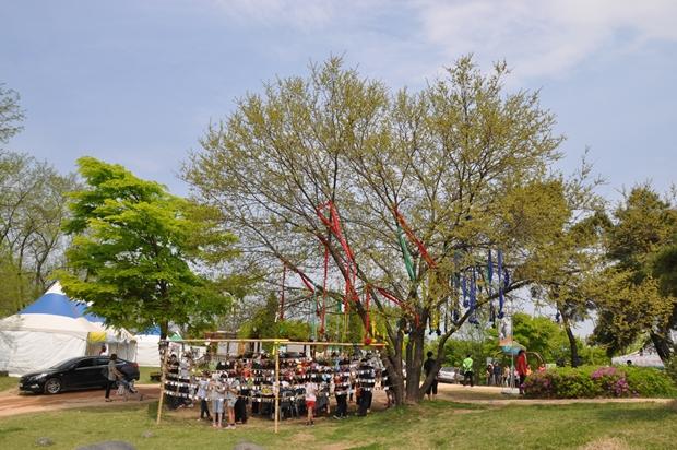 소원의 나무