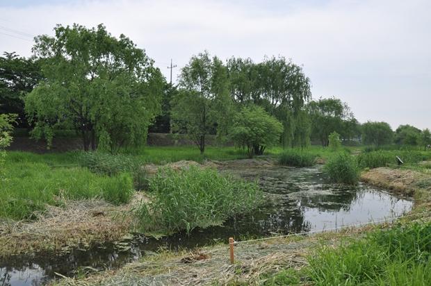 습지생태원