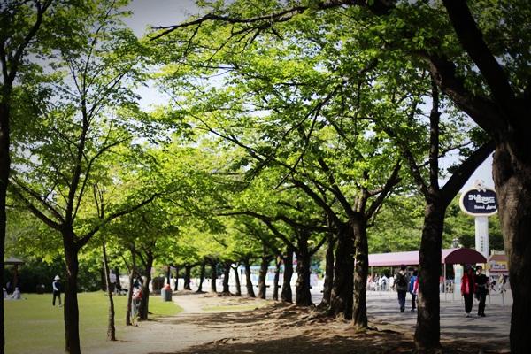 서울대공원피크닉021