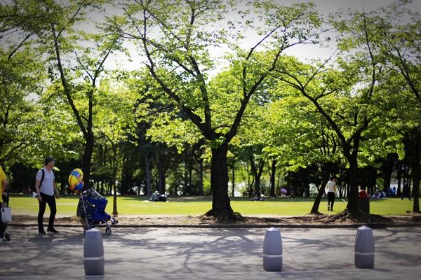 서울대공원피크닉031