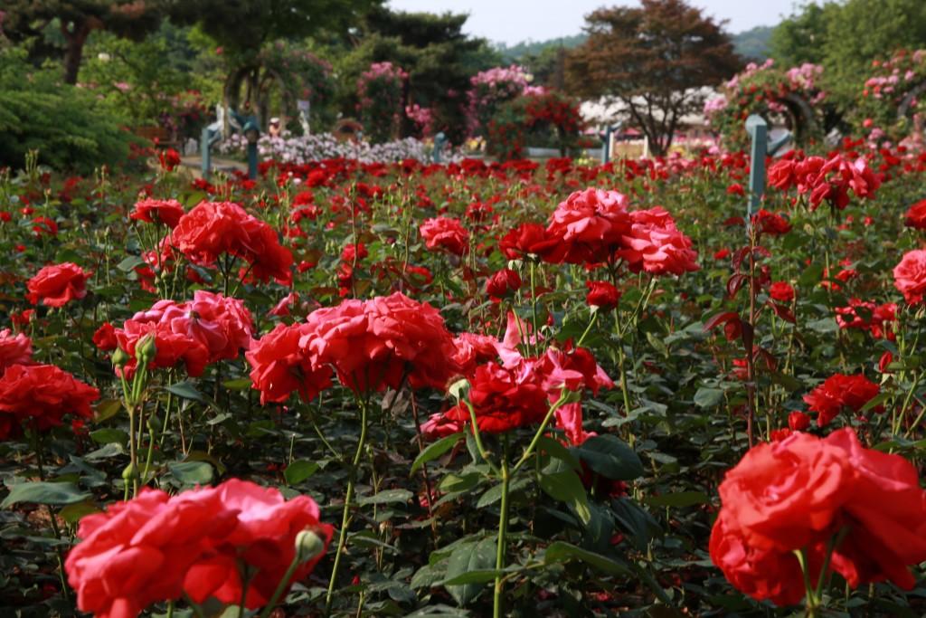 서울대공원 389