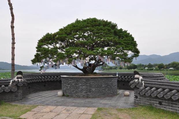 세한정 소원나무