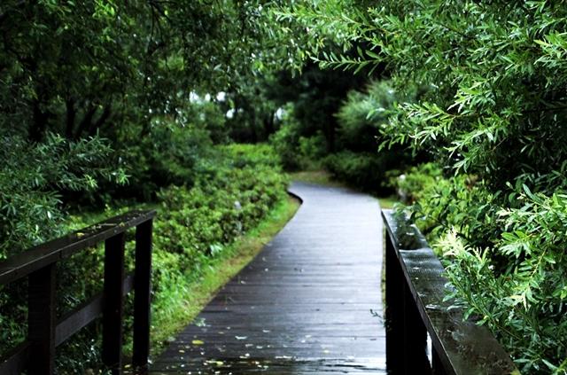 경안천습지생태공원010