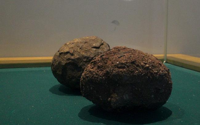 공룡알 화석