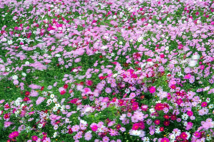 구리한강시민공원006