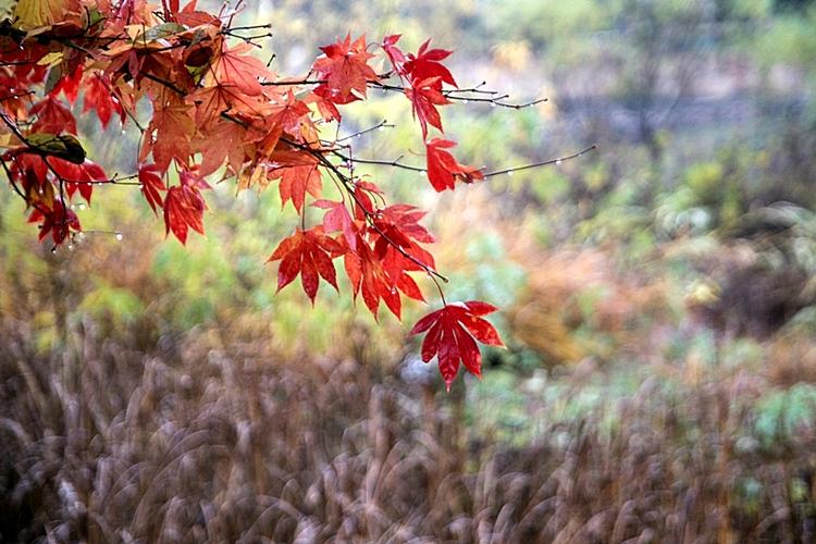 다산생태공원016