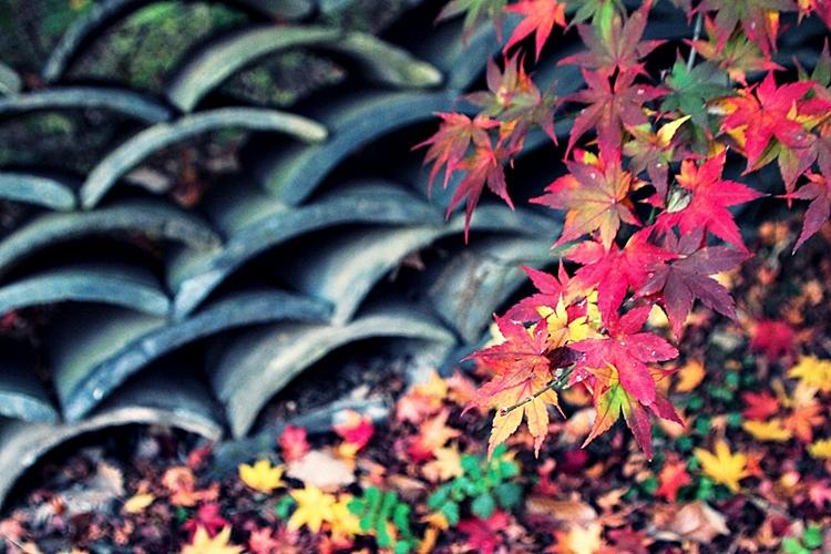 율봄식물원001