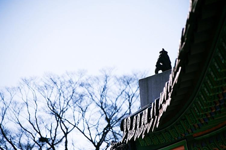 지붕위의 잡상
