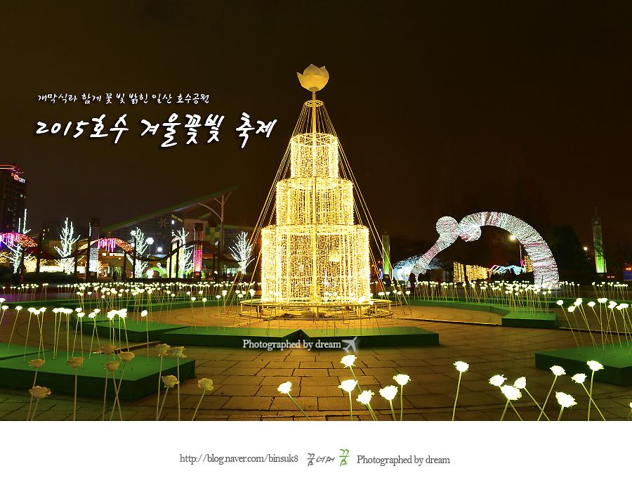 2015.12.18개막식과함께 꽃빛밝힌 일산호수공원