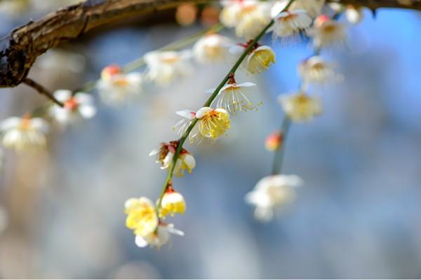 안산 식물원 봄마중하다.