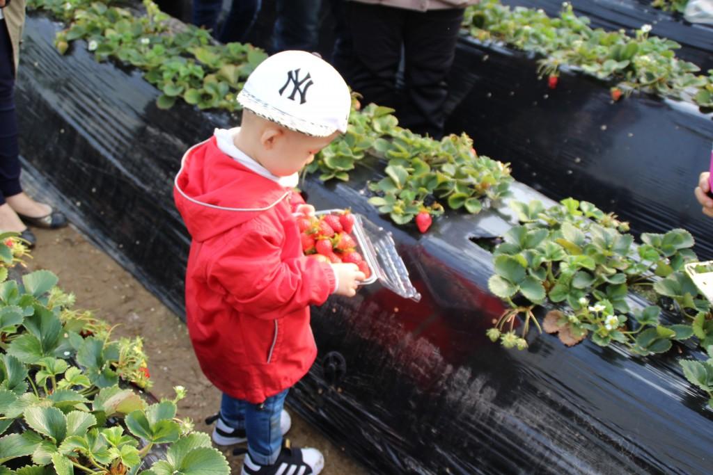 딸기축제.딸기,여운영박물관 020