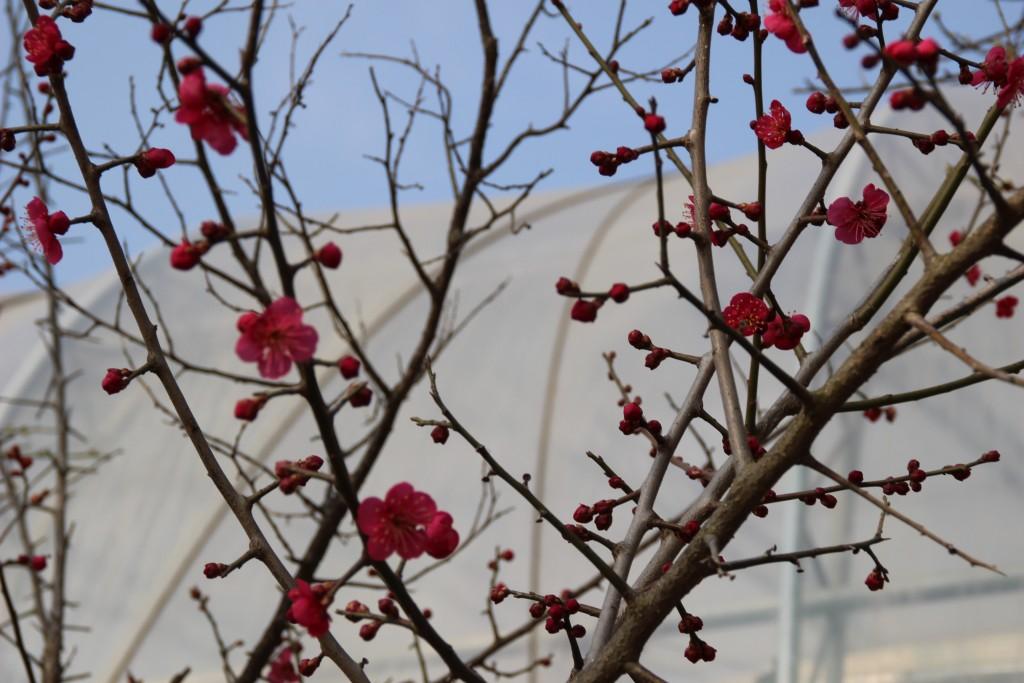 딸기축제.딸기,여운영박물관 051