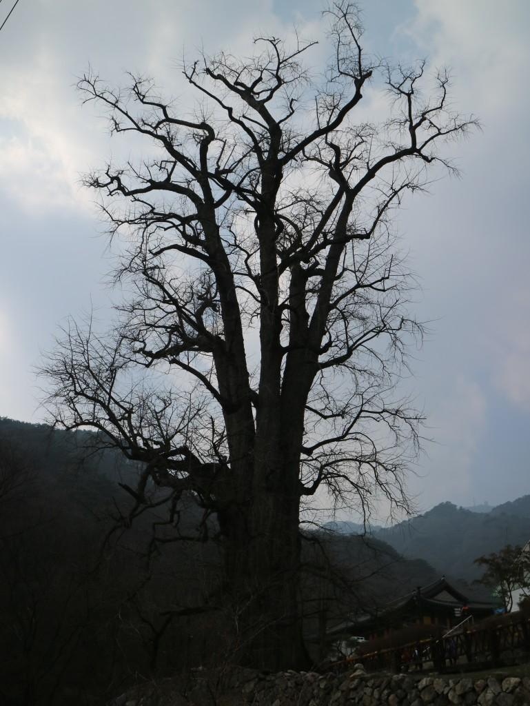 양평딸기, 안산다문화 153
