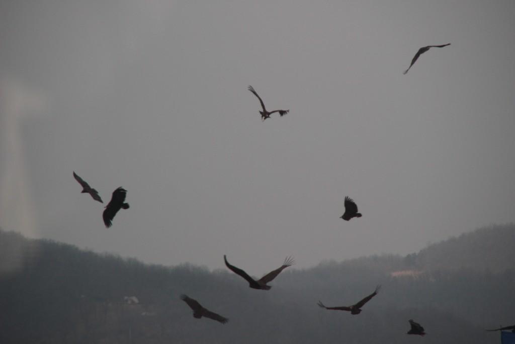 캠프그리브스,독수리,도라산공원 066