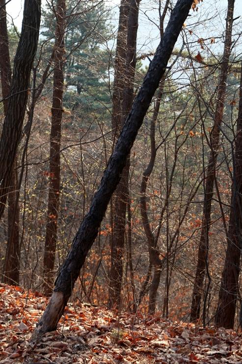 숲속 사진