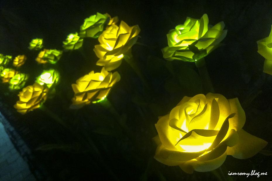 빛나는 꽃들