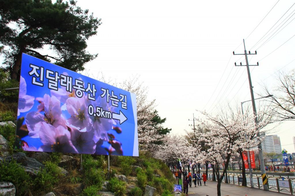부천원미산진달래축제 , 강남역치맥 003