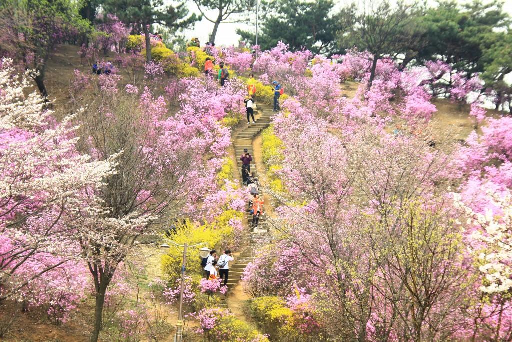부천원미산진달래축제 , 강남역치맥 071