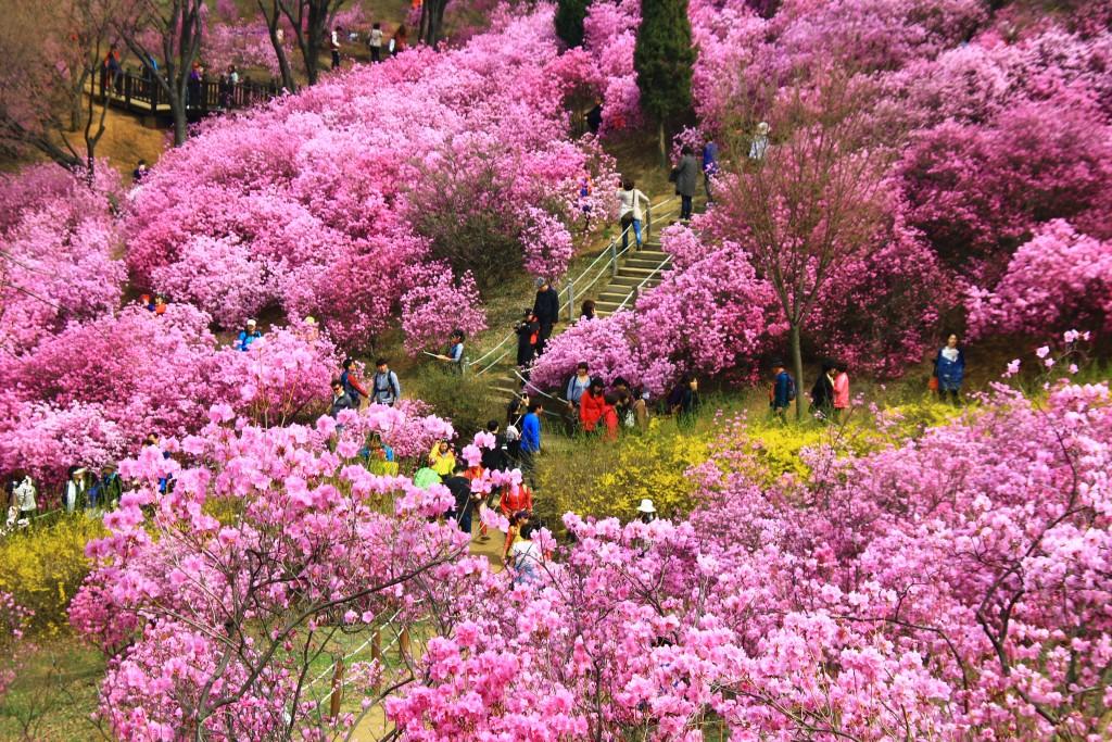 부천원미산진달래축제 , 강남역치맥 148