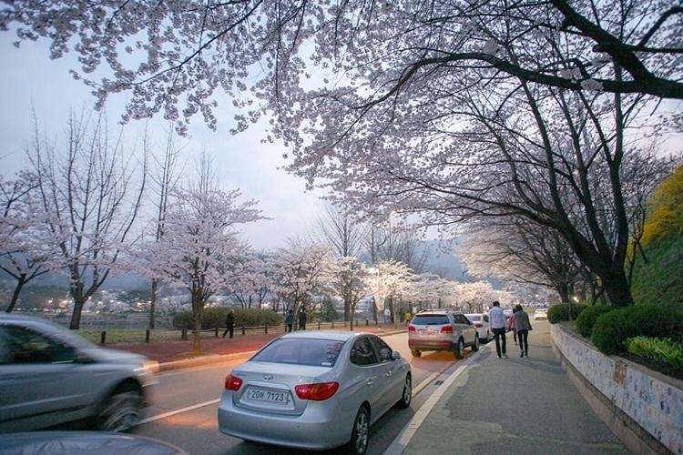 설봉공원벚꽃나들이003