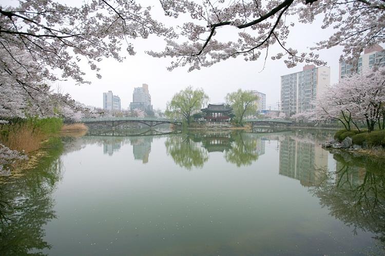 안흥지벚꽃나들이001