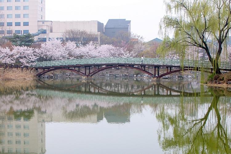 안흥지벚꽃나들이005