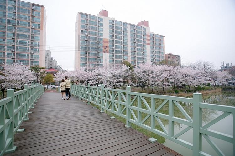 안흥지벚꽃나들이010