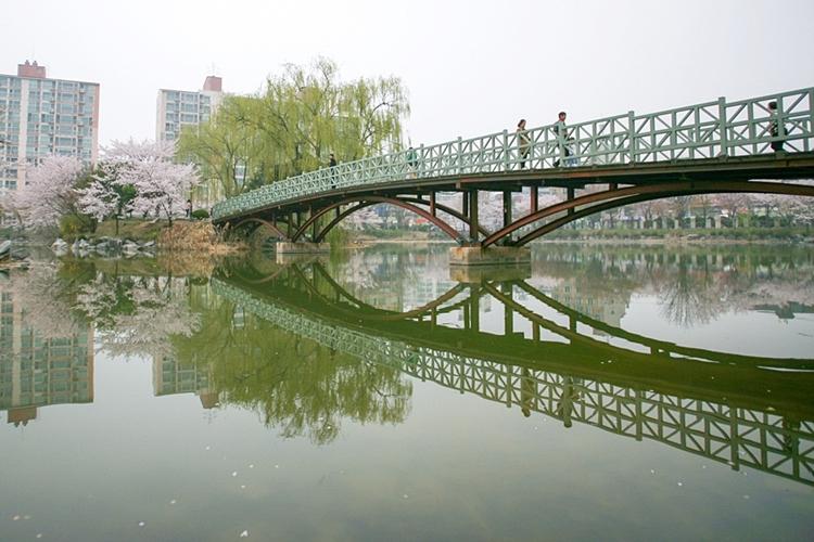 안흥지벚꽃나들이016