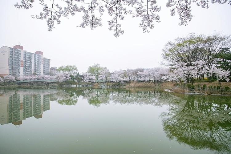 안흥지벚꽃나들이019