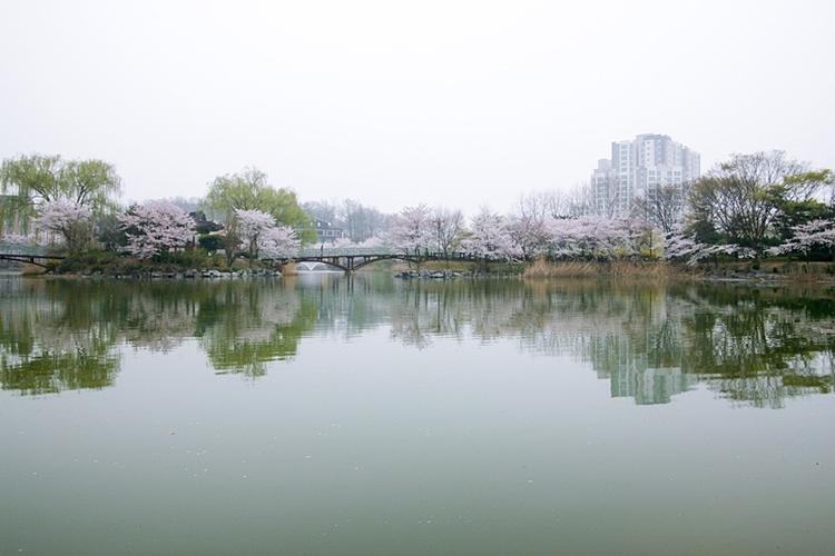 안흥지벚꽃나들이021