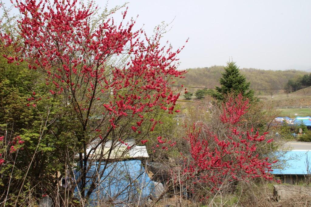 연강나루,그리팅맨,태풍전망대 137