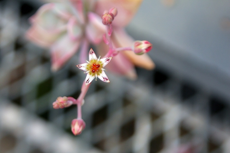 율봄식물원011