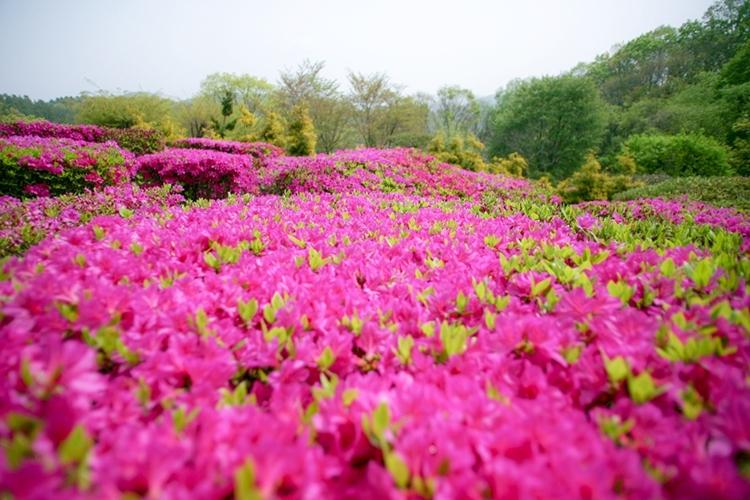 율봄식물원018