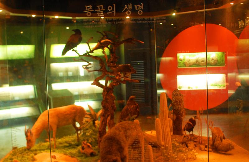 몽골의 야생 동물들
