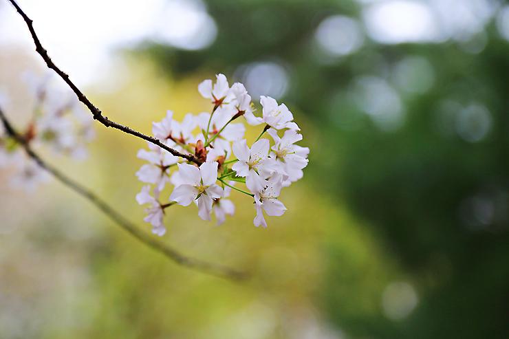 활짝 핀 꽃