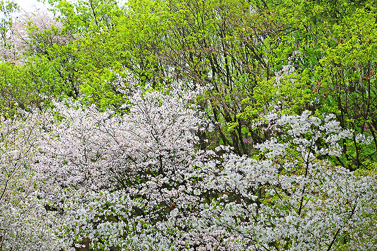 꽃과 나무들