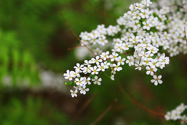 만개한 꽃들