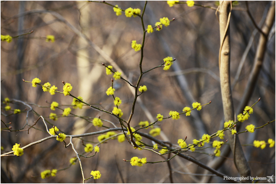 숲에 핀 노란 꽃